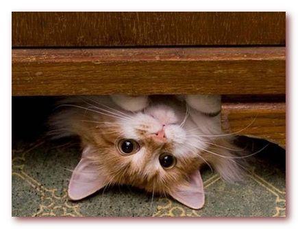 Как быстро привести дом в порядок? Заведите кошку!