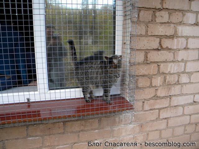 Сетка на окно для кошек своими руками 23