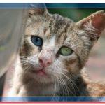 Как накормить бездомных кошек, без труда и недорого