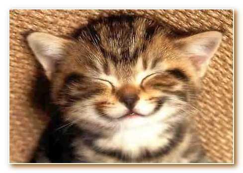 Котенок улыбается