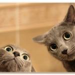 Как научить кошку подавать лапу