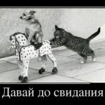 О кошаках с Башорга - 014. Мегапак