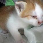 Котёнок Килька